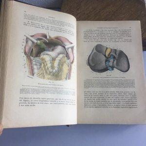 Tratado de Anatomía Topográfica. por L. Testut