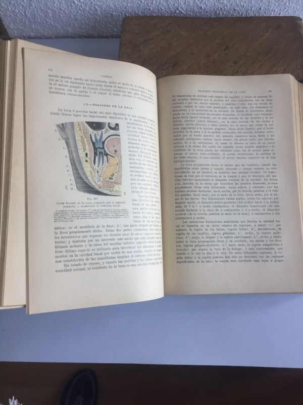 Tratado de Anatomía Topográfica Tomos I y II