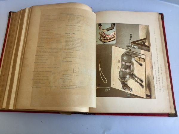 Formulario Enciclopédico de Veterinaria 1889 I y III