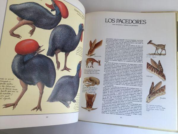 Después del Hombre: Una Zoología del Futuro. 1982